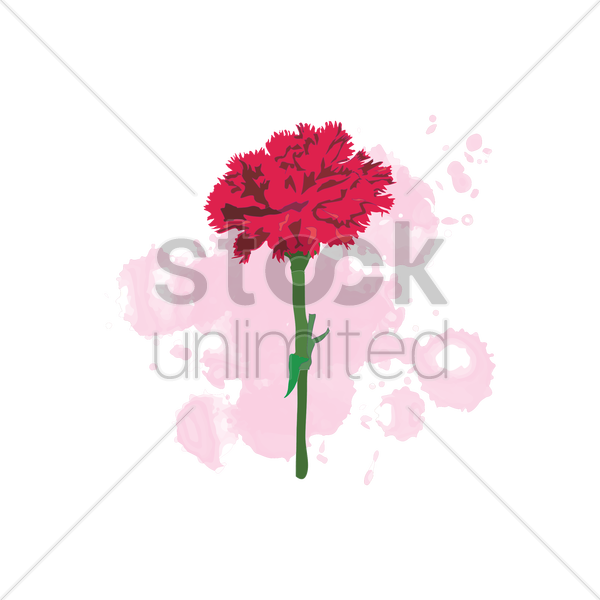 carnation vector graphic