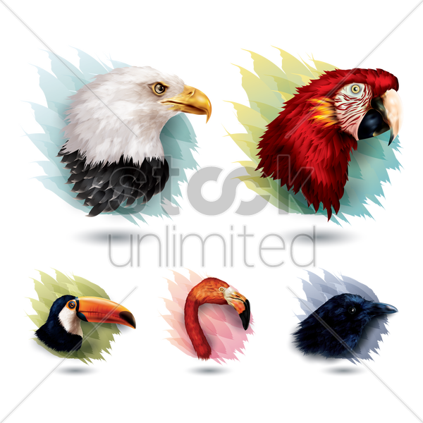 collection of birds vector graphic