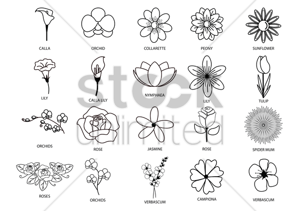collection of different flowers vector graphic