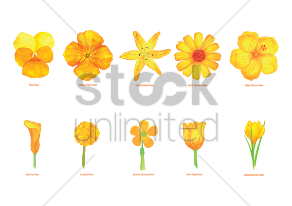 Free collection of flowers vector graphic
