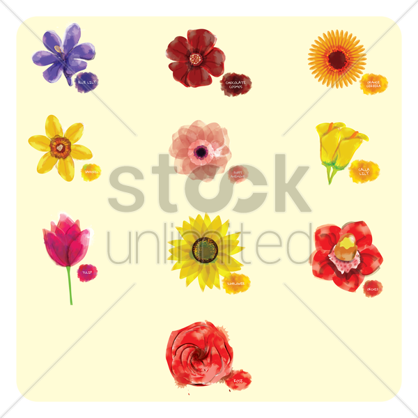 collection of flowers vector graphic