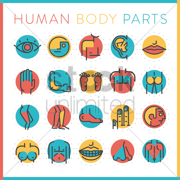 collection of human body parts vector graphic