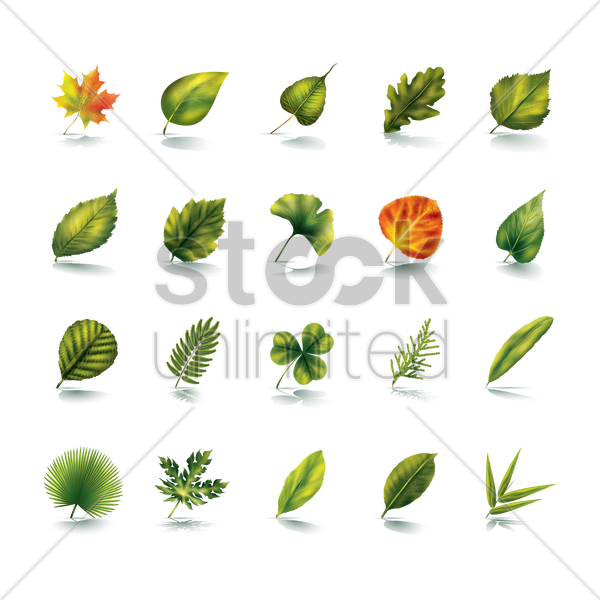 collection of leaves vector graphic