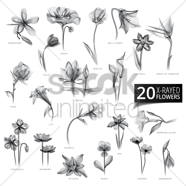 collection of x-rayed flowers vector graphic