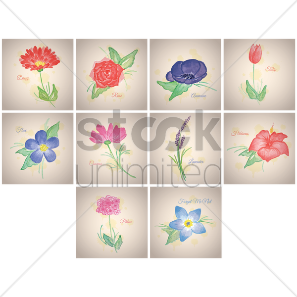 collections of flowers vector graphic