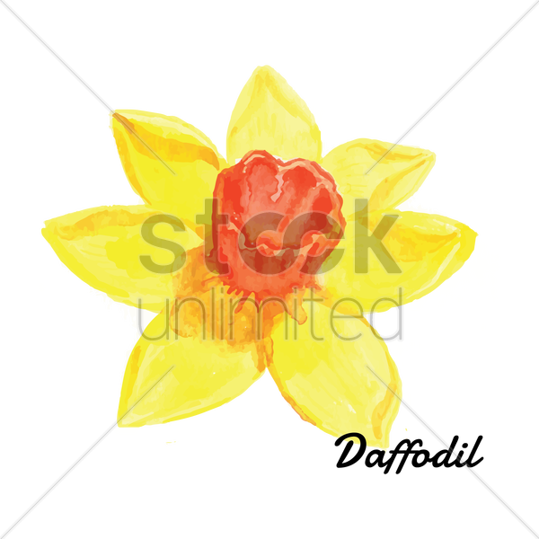 daffodil vector graphic
