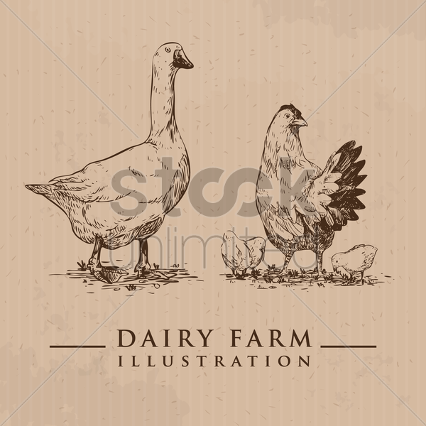 duck with hen and chicks vector graphic