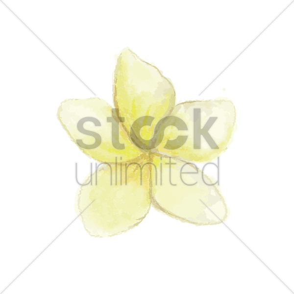 frangipani vector graphic