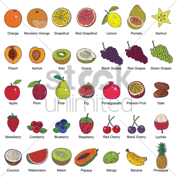 fruit collection vector graphic