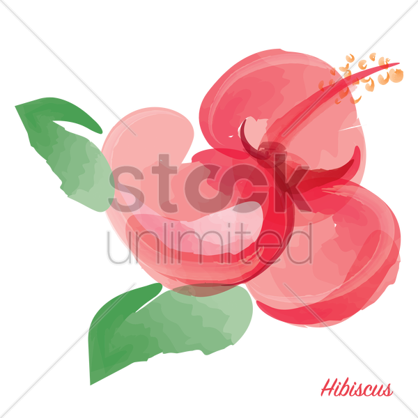 hibiscus vector graphic