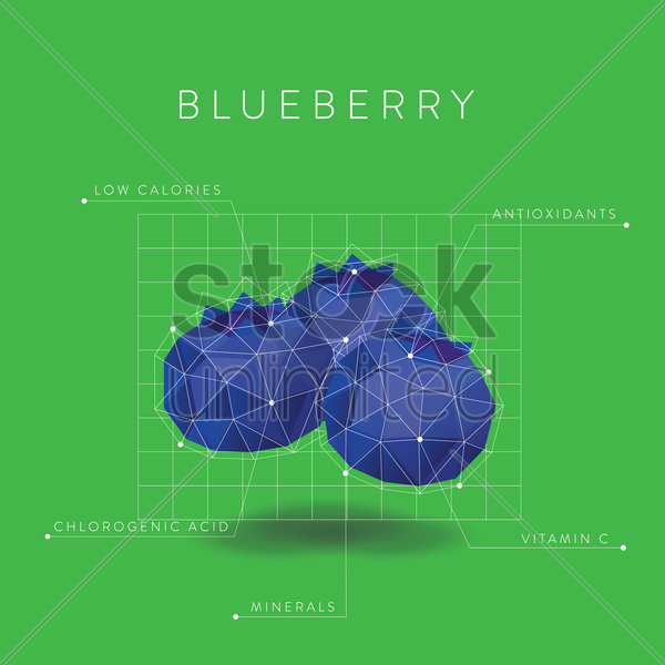infographic of blueberry vector graphic