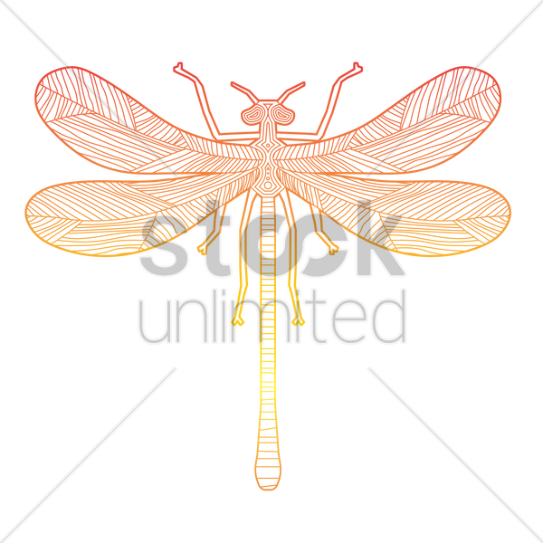 intricate dragonfly design vector graphic