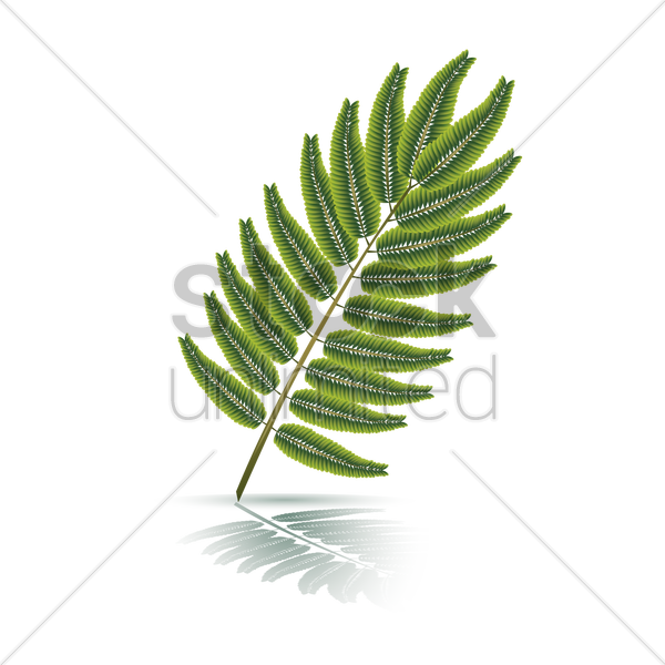leaf vector graphic