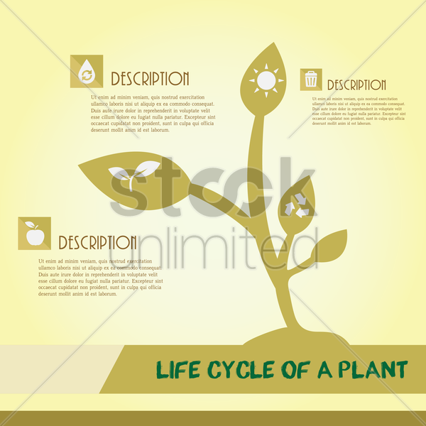 Free life cycle of a plant infographic vector graphic