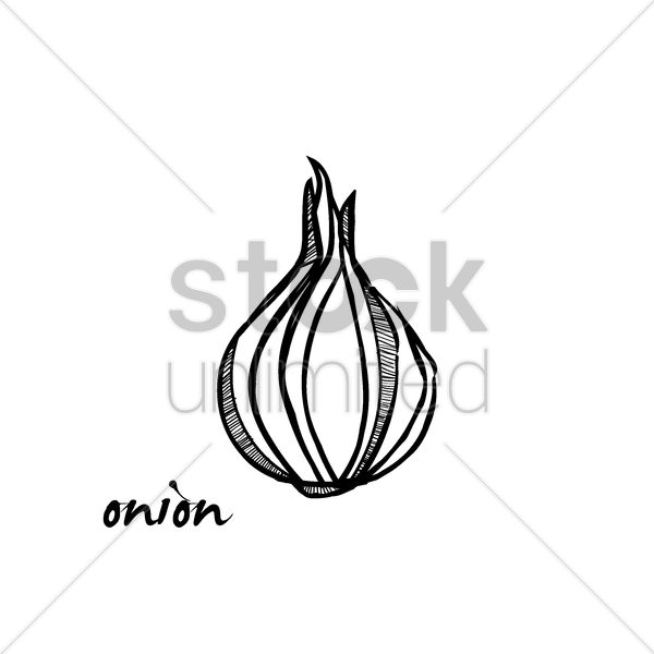 onion vector graphic