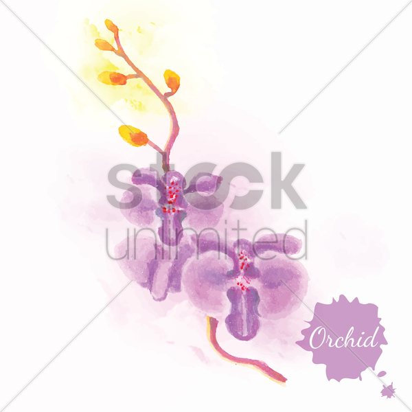 orchid vector graphic