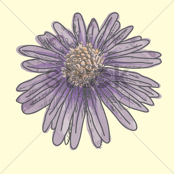purple daisy vector graphic