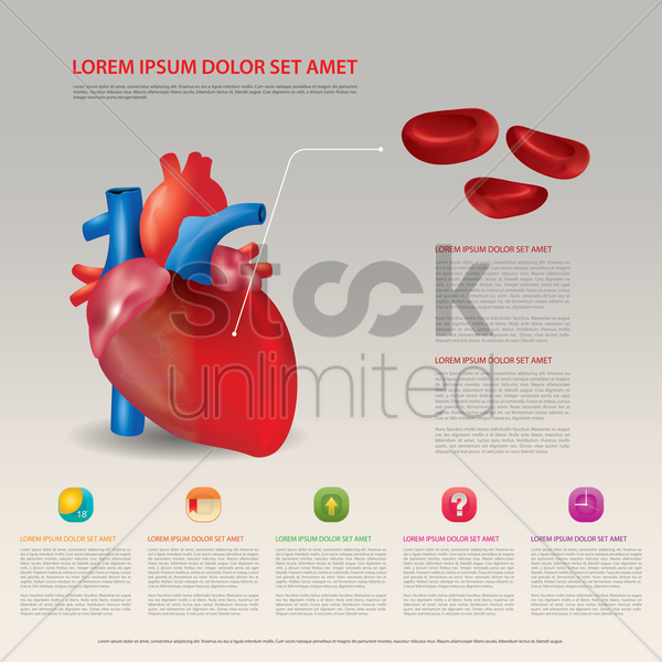 red blood cells in heart vector graphic