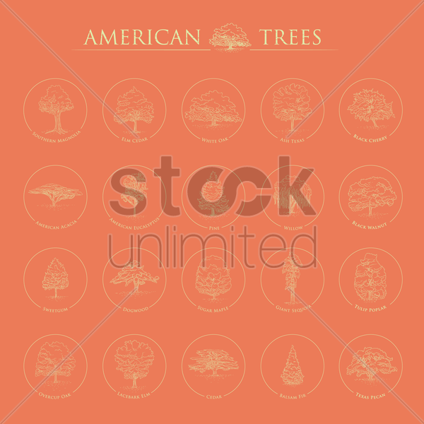 set of american trees vector graphic