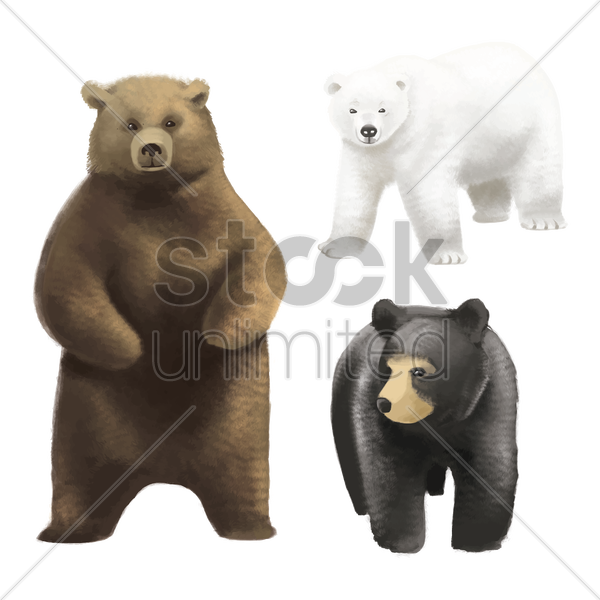 set of bears vector graphic