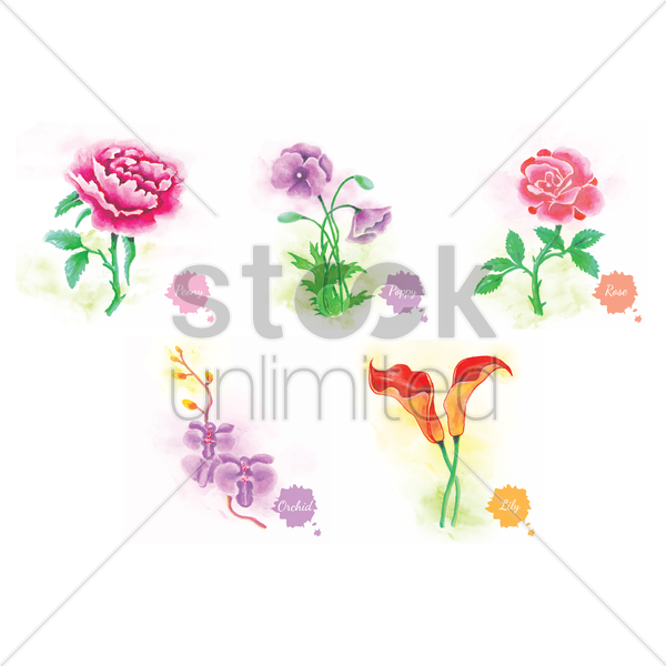 set of flowers vector graphic