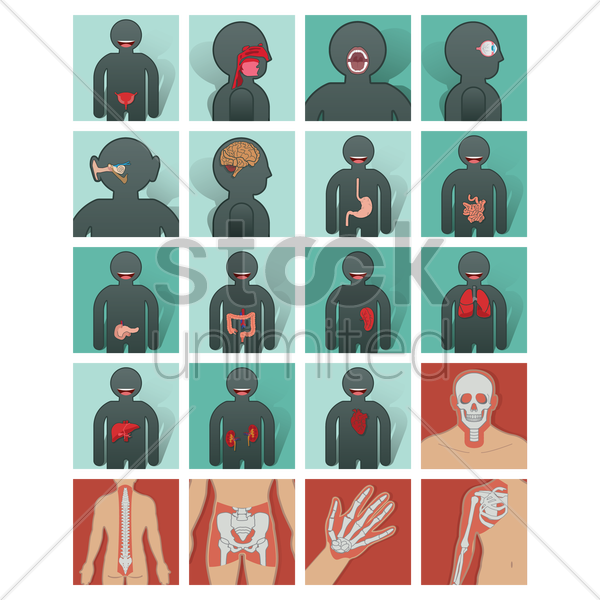 set of human organs vector graphic