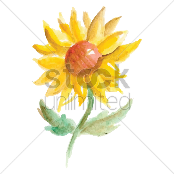 sunflower vector graphic