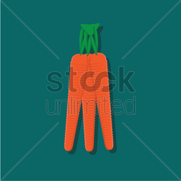 three carrots vector graphic