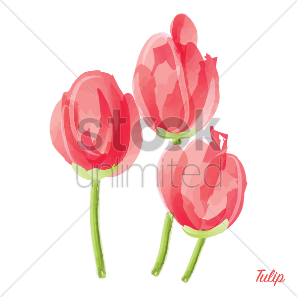 tulip vector graphic