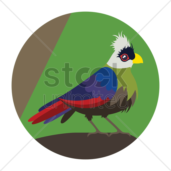 turaco vector graphic