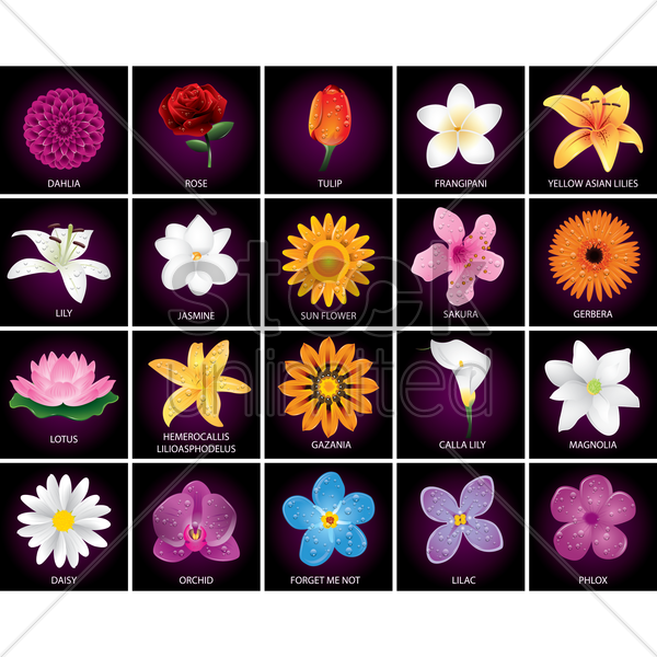 various flowers vector graphic
