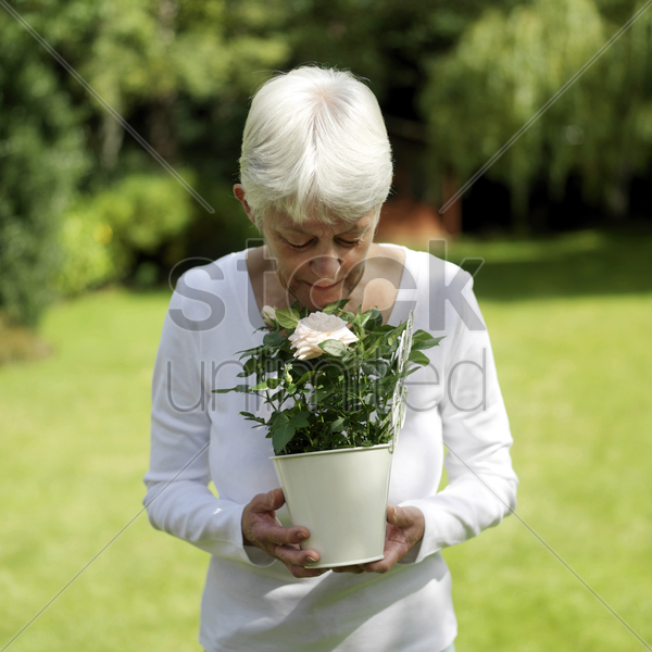 a senior lady smelling the rose stock photo