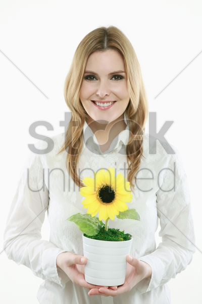 businesswoman holding sunflower in a pot stock photo
