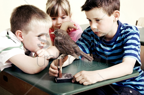 children looking at a model bird stock photo