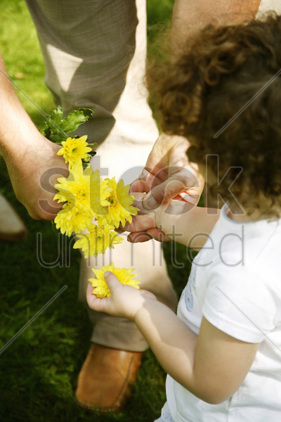 cute little young girl getting flowers from her father stock photo