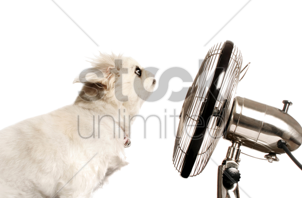 dog sitting in front of a table fan stock photo