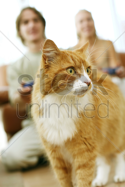 focus on a cat with couple playing video game console in the background stock photo