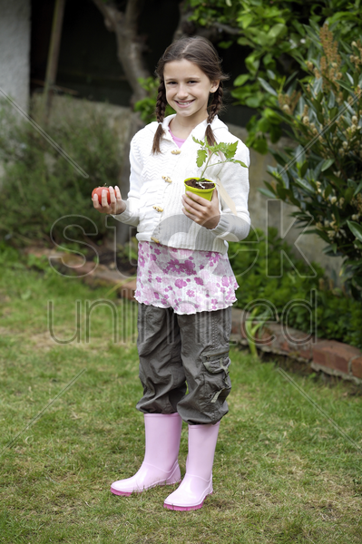 girl holding a tomato and a tomato plant stock photo