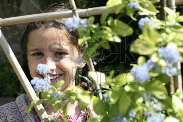 girl looking through wooden post with flowers stock photo