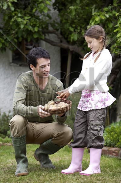 girl putting potato into a basket held by the man stock photo