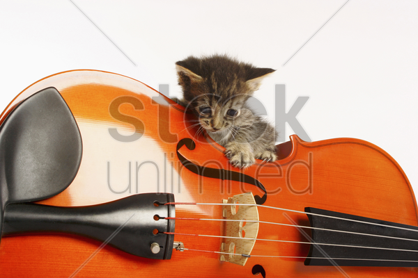 kitten playing with violin stock photo