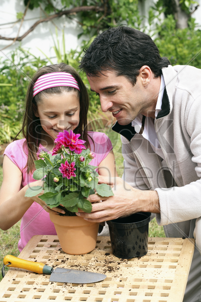 man and girl planting flower into a pot stock photo