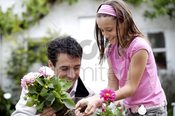 man and girl planting flower into flower pot stock photo