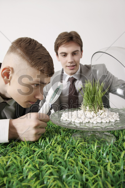 man looking at grass seedling under magnifying glass stock photo