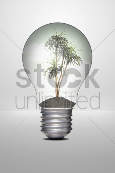 palm tree growing in a light bulb stock photo