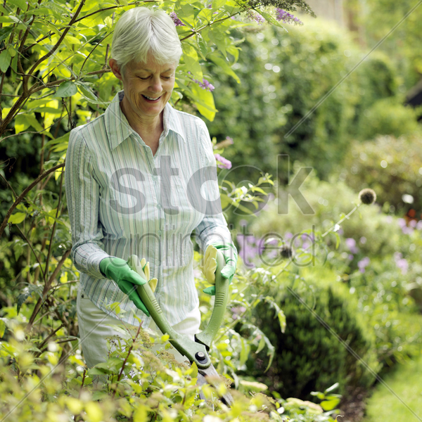 senior lady doing yard work stock photo