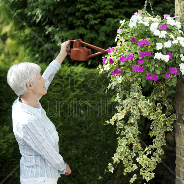 senior man doing yard work stock photo