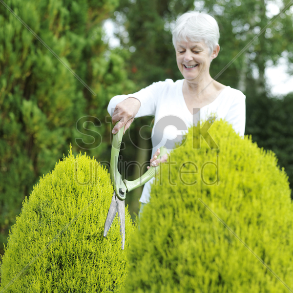 senior woman pruning bush with hedge clippers stock photo