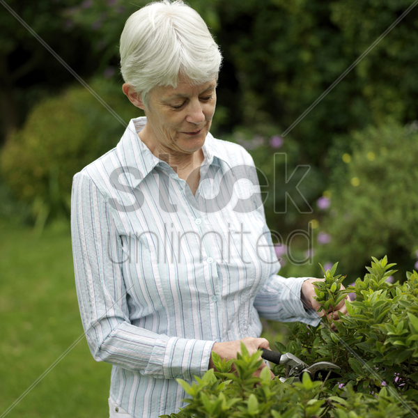 senior woman trimming plant stock photo