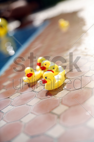 toy ducks beside a swimming pool stock photo